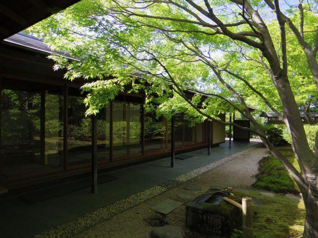 茶室『童子庵』も谷口吉生設計。新緑の時期の庭園は絶景です