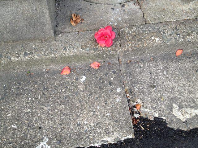 pink-flower02