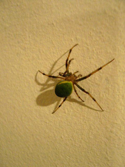 %e8%8f%b4%ef%bd%bf%e9%80%95%ef%bd%a8%e9%80%95%ef%bd%bb%e8%9c%92%e3%83%bbgreen-spider