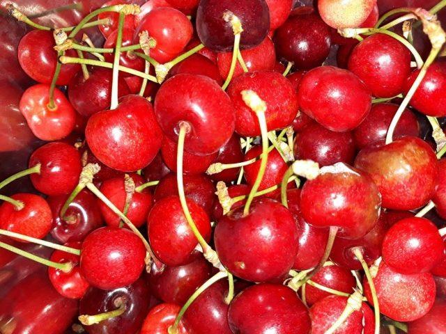 イタリアの市場に出回るサクランボ。夏の始まりを告げるサクランボが登場すると、その後にメロンやプラム、桃といったみずみずしい果物が続きます。