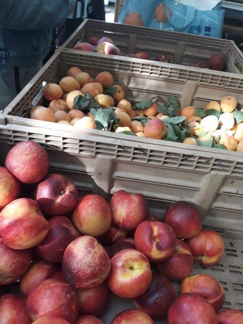 今年のイタリアは冷夏で、夏の果物を堪能するのはまだ先になりそうですが。